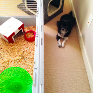 Pet sitter - dogs, cats, hamsters - my house or yours!