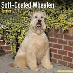 Softcoated Wheaten Terrier Kalender 2017 Avonside