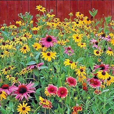 2000+ALL PERENNIAL WILDFLOWER MIX 17 Different Flower Seeds Butterflies Garden