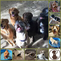 Experienced Dog Daycare Handler Wanted