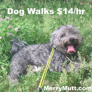$14/hr Toronto Dog Walker
