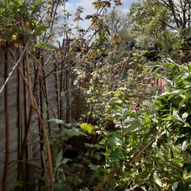 PRIME GARDENS.GARDENING,FENCING,TREE SURGERY,RUBBISH CLEARANCES.14YRS