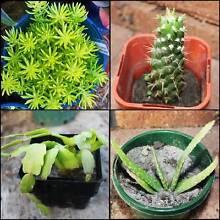 Succulents for sale - Launceston area Riverside West Tamar Preview