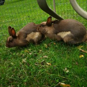 2 Matching Tan Rabbits - outdoor - $45 for both