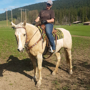For Sale - Palomino Mare