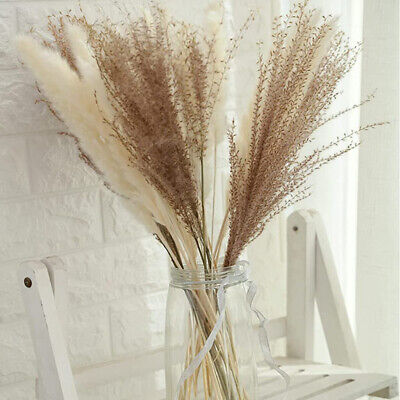 Home Decoration - 10/15/30PCS Natural Dried Flower Reed Pampas Grass Wheat Ears Setaria Home Decor