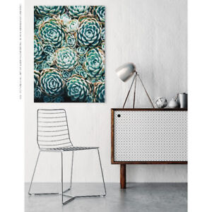 Harmony Succulent No.4 - Wall Art Mounted Under Acrylic Glass