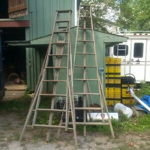 Antiques wooden orchard ladders.