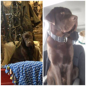 Lost dogs in Ladysmith, QC
