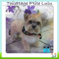 Toilettage P'tite Lulu