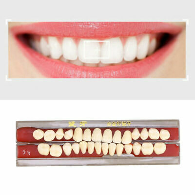 1 Box Denture Porcelain High Quality Oral Teeth Dental Accessories For Hospital