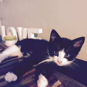 Cute kittens to good home litter trained