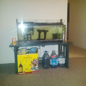 aquarium with everything you need, including fish