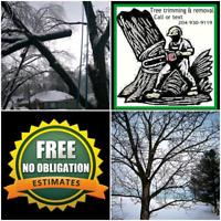 TREE TRIMMING AND REMOVAL SERVICE CALL OR TEXT TODAY