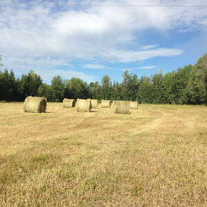 Hay for sale Prince George British Columbia image 1