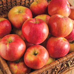 WANTED apples / crab apples