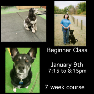 Beginner Class (dog training)