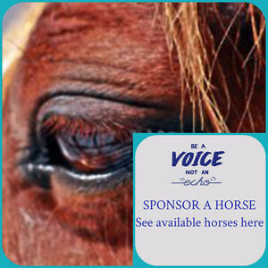 Looking for sponsors - Horse rescue