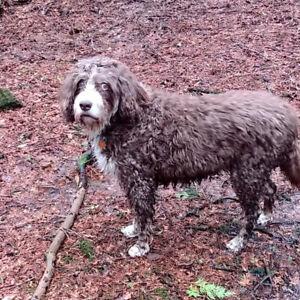 LOST FEMALE DOG IN HARROWSMITH/WILTON AREA