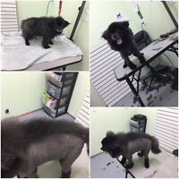 Casual part-time groomer needed for SPAWS in Penhold