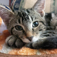 Cat in need of a new home!