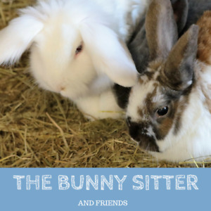 Rabbit Sitter / Bunny Sitter - Experienced