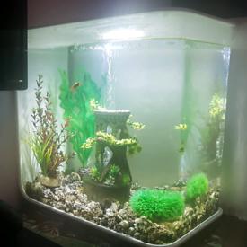 Biorb flow 30 litre fish tank