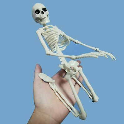 Skeleton Active Anatomy Human Model Medical Halloween Party Decor