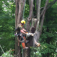 Professional and  Insured Tree Service