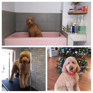 Pension chien/Garderie canine/Toilettage