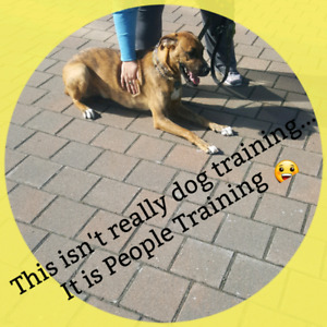 Tasha's Dog Training & More - Dog Obedience Training