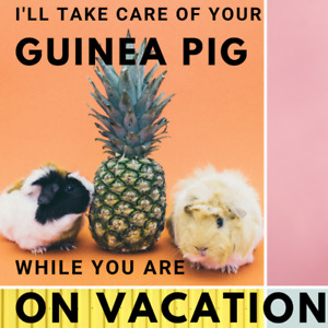 Guinea Pig sitting while you're away