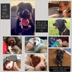 URGENT - Foster homes needed - Canadian Odd Squad Animal Rescue