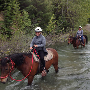 6 seasoned trail horses for sale- your choice