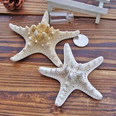 Natural Tropical Ocean Sea Star Starfish Wedding Party Hanging Decoration Hot