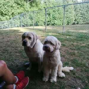 Unique Dog Sitting Services - Space available now for Fall Kawartha Lakes Peterborough Area image 3