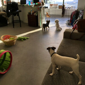 Small dog Big Heart Daycare