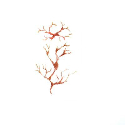 Halloween Temporary Tattoos Tree Veins Blood Makeup Dress Up Costume Party - Halloween Tree Tattoo