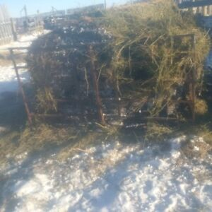 sheep equipment for sale