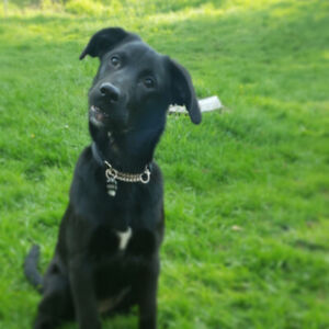 8 month old puppy needs a new home