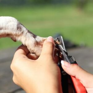 Dog grooming lesson (clipping nails)