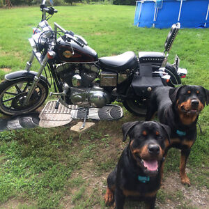 Sportster for sale or trade