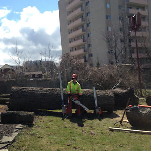 Tree removal and log milling Kitchener / Waterloo Kitchener Area image 2