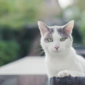 Special cat need a special home Free