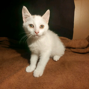 Adorable male and female kittens!