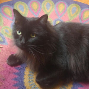 New home needed for sweet cat