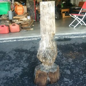 Wood for sale - Cookies and slabs Spalted Birch and Ash lumber