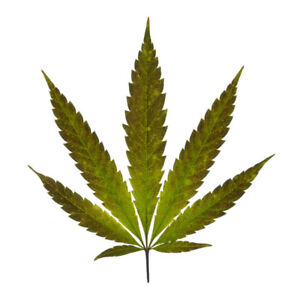 CANNABIS/WEED/POT DOMAIN NAMES FOR SALE