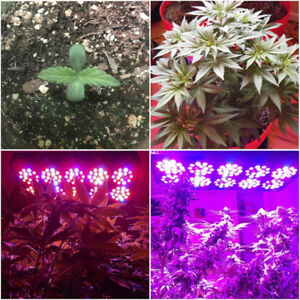 LAMPOSH alpha 8 LED GROW LIGHT - FULL SPECTRUM 280w