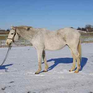 Safe and reliable gelding for part board